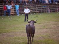 Torero retando al Toro - Fiestas de la Candelaria