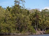 Vegetación en el estero - Estero Rico