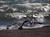 En la Playa - Estero Rico