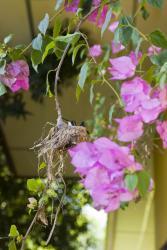 Visita Flor en su Nido