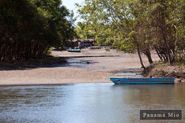 Vista desde el Muelle en Estero Rico - Marea Baja